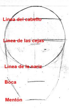 EL ROSTRO HUMANO- VISTA FRONTAL (2/4)